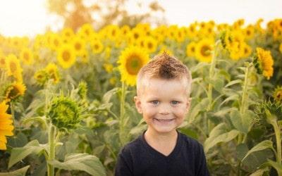 Little Boy Posing in Front of the Sunflower Farm