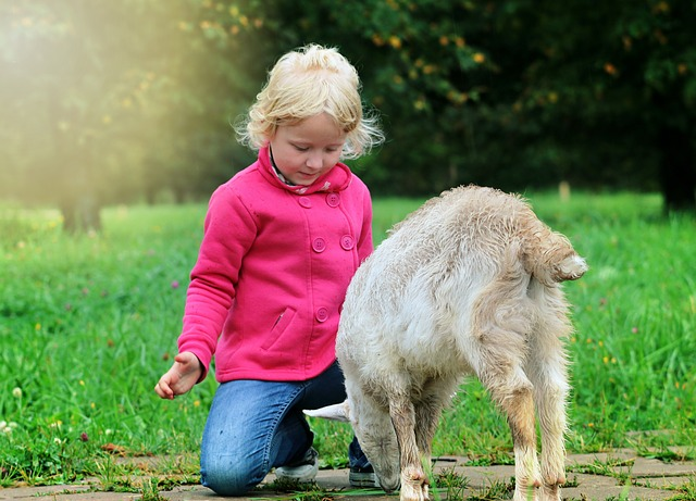 Little Girl Playing with a Lamb
